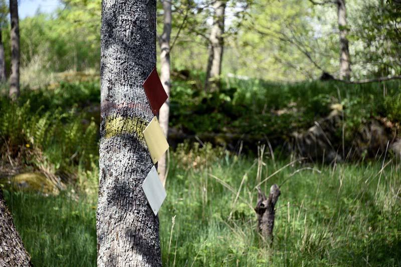 Lilla Masugnsträsketin luontopolku 1,8 km